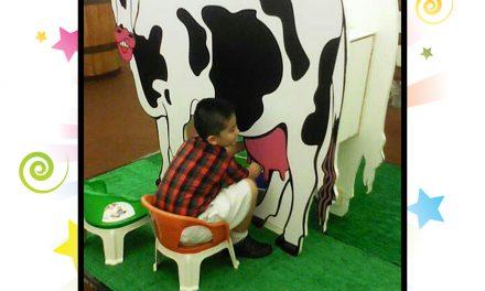 Sewa Permainan Anak, Memerah Susu Sapi